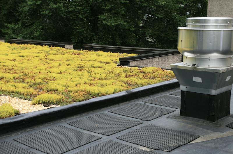 Für Ihre Dachbegrünung stehen Ihnen unterschiedliche Pflanzen zur Auswahl. Beispielsweise verschiedene Gräser oder Sedum-Arten bei einer extensiven Begrünung.